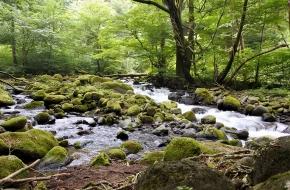 名水百選にも選ばれた「尚仁沢湧水」の遊歩道を散策。<br /> 気軽に行ける遊歩道でこの秘境感を味わえます。<br /> <br /> 期間 通年